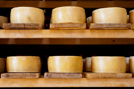 World famous Croatian Pag cheeses on the shelves of dairy Stock Photo