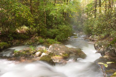 Mountain stream in Great Smoky Mountains national park Imagens