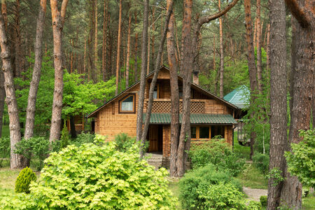 dacha: Cozy wooden house in the coniferous forest