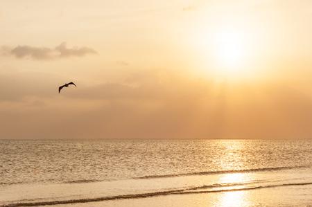 floridian: Sunset on pristine sandy beach of Fort Meyers, Florida