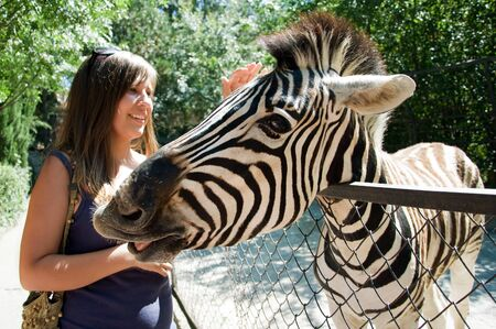 zoo youth: The meeting human and the zebra in the zoo Stock Photo