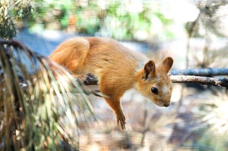 bushy: portret of a cute squirrel in zoo