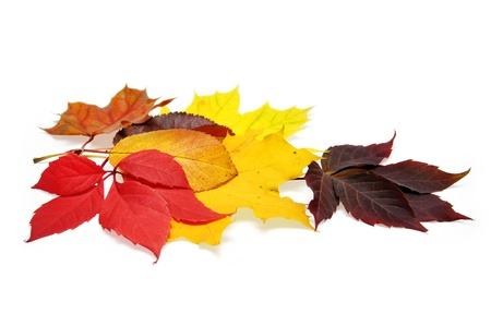 autum: colorful autumn leaves over white background with clipping path