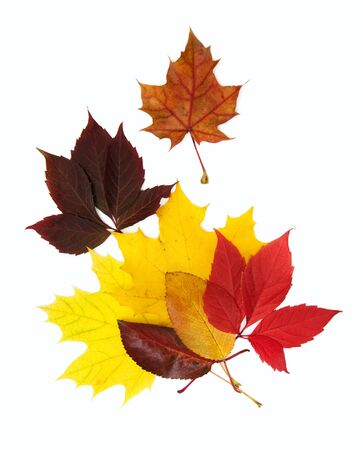 colorful autumn leaves over white background with clipping path photo