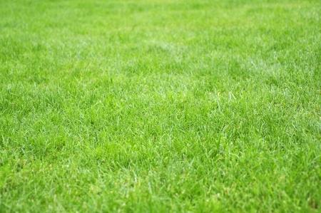 Green grass background texture straight Stock Photo