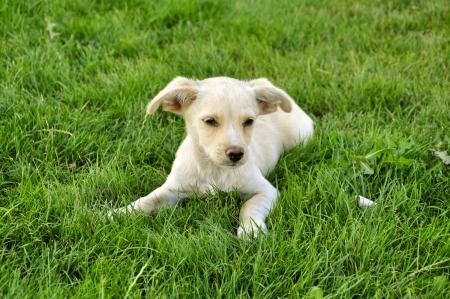 little cute puppy on green grass photo