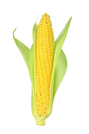 corn kernel: Ear of Corn isolated on a white background Stock Photo