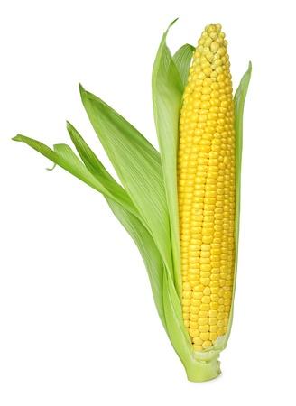 elote: Mazorca de maíz aislado en un fondo blanco