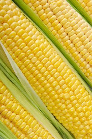 elote: Mazorcas de maíz dulce crudo de cerca Foto de archivo