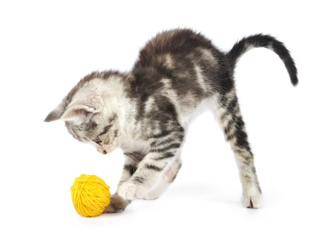 clew: Grey kitten playing with yellow clew  isolated on white background Stock Photo