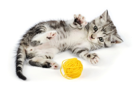 Grey kitten playing with yellow clew, isolated on white background photo