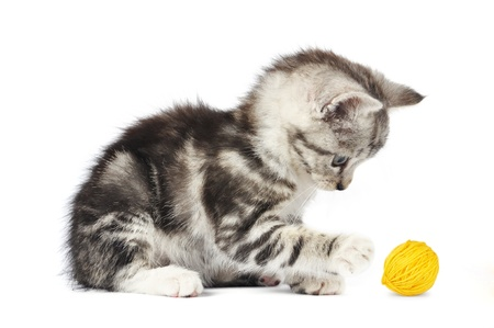 grey kitten playing with a yellow clew isolated on white photo