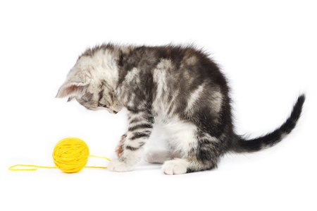 clew: grey kitten playing with a yellow clew isolated on white Stock Photo