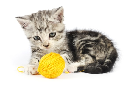 pussy yellow: Grey kitten playing with yellow clew isolated on white background