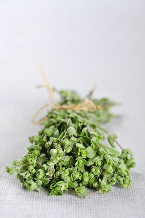 marjoram: Bunch of blooming marjoram herb closeup on beige tablecloth  Small shallow DOF