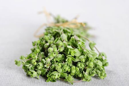 Bunch of blooming marjoram herb closeup on beige tablecloth Stock Photo - 16218515