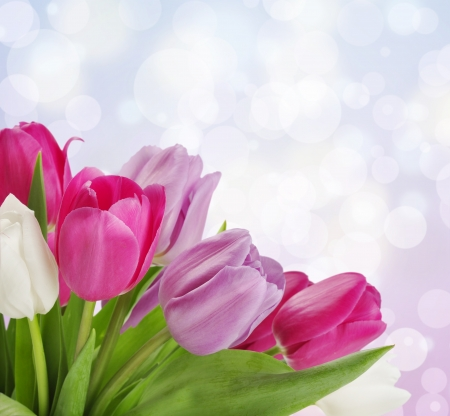 Pink, violet and white tulips on pink bokeh background photo