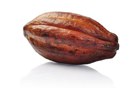Verse cacao fruit geïsoleerd op een witte achtergrond. Clipping pad opgenomen