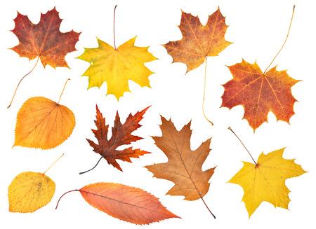 Conjunto de otoño hermoso colorido hojas aisladas en blanco Foto de archivo