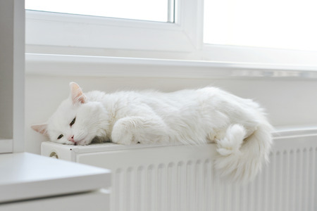 Beautiful white cat relaxing on the radiator closeup