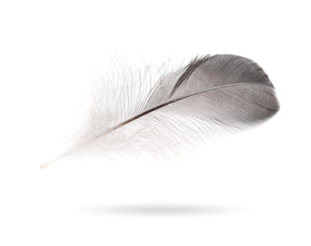waft: Gray small feather isolated on white background Stock Photo