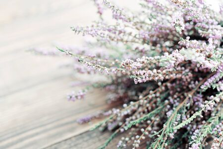 heather: Calluna vulgaris (known as common heather, ling, or simply heather) on wooden background closeup