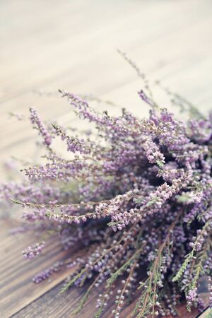 rough background: Calluna vulgaris (known as common heather, ling, or simply heather) on wooden background closeup