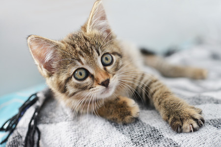 cute kittens: Cute little kitten lying on sofa closeup