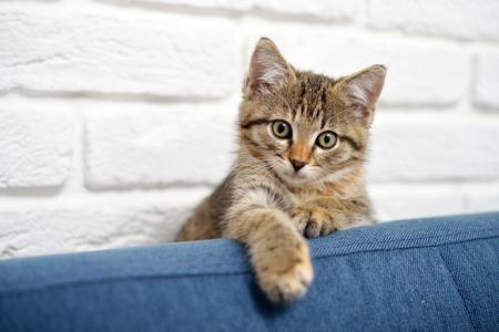 Cute little kitten lying on sofa closeup