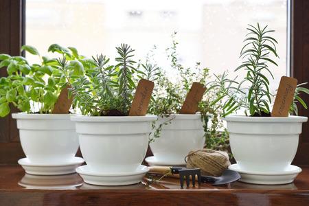 windowsill: Fresh herbs in pot on windowsill.