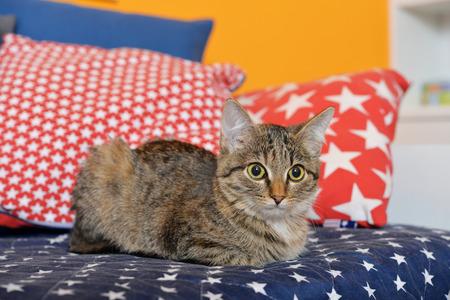 cute kittens: Cute little kitten lying on sofa closeup, small depth of field