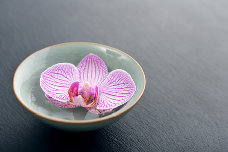 Pink orchid in bowl on black slate background closeup