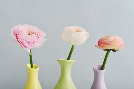 Persian buttercup flowers (ranunculus) in vases on blue background