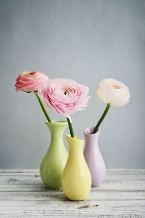 bouquet fleur: Persian buttercup flowers (ranunculus)  in vases on blue background