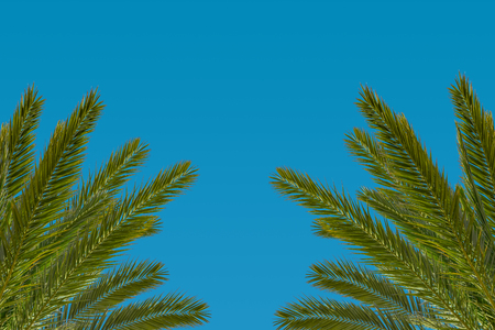 bahama: Coconut palm leafs on blue sky