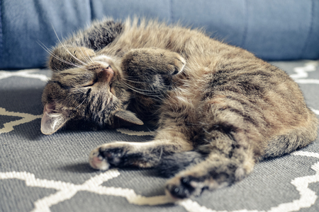 Green eyed cute cat  relaxing on grey carpet