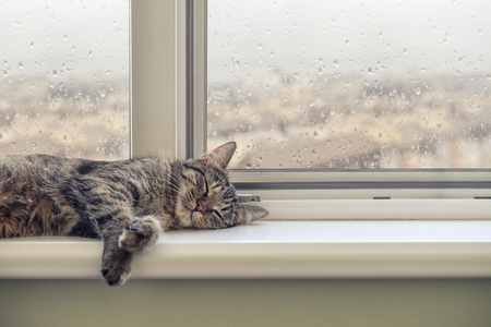 Cute cat sleeping on the windowsill in a rainy day Фото со стока