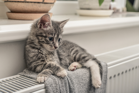 Cute little grey kitten with blue eyes relaxing on the warm radiator closeup Stock Photo