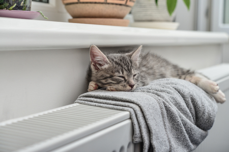 Cute little grey kitten with blue eyes relaxing on the warm radiator closeup Stockfoto