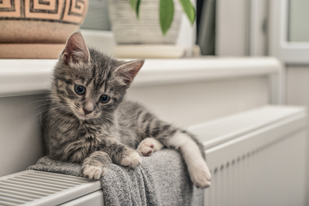 Cute little grey kitten with blue eyes relaxing on the warm radiator closeup Imagens