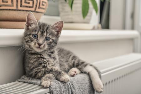Cute little grey kitten with blue eyes relaxing on the warm radiator closeup Foto de archivo