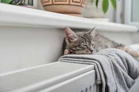Cute little grey kitten with blue eyes relaxing on the warm radiator closeup 스톡 콘텐츠