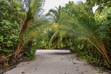 Jungle and the path at sunny day on Fehendhoo island, Maldives