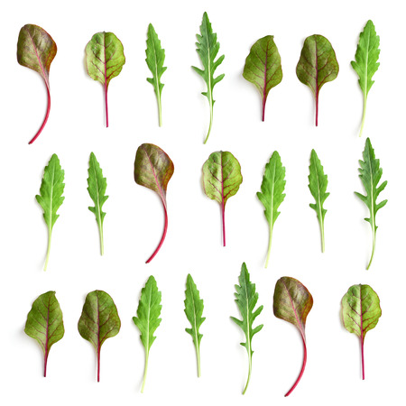 Pattern from chard  and arugula salad leaves on white background