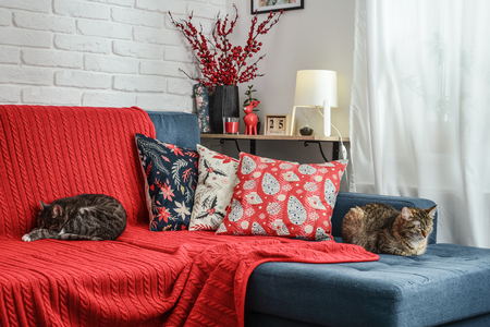 Christmas decorations with candles and red plaid on couch with cat in living room. All photos in frames on the wall made by me.