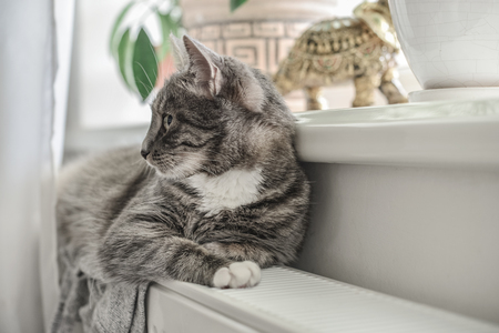 Cute grey cat with green eyes relaxing on the warm radiator closeup