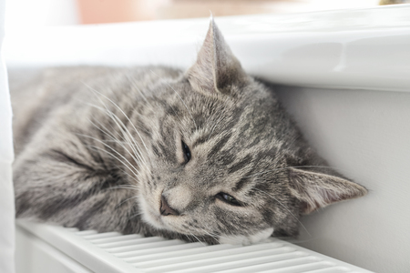 Cute grey cat with green eyes sleeping on the warm radiator closeup Stock Photo