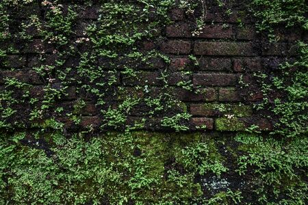 Old brick moss-covered wall. Grunge background