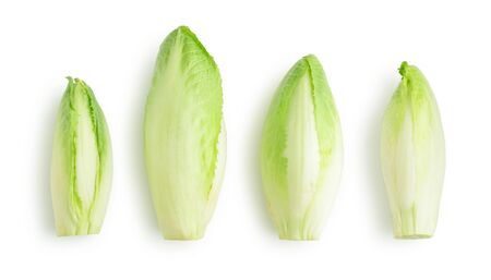 Fresh endive (Cichorium endivia) with beautiful soft green leaves isolated on white background, top view