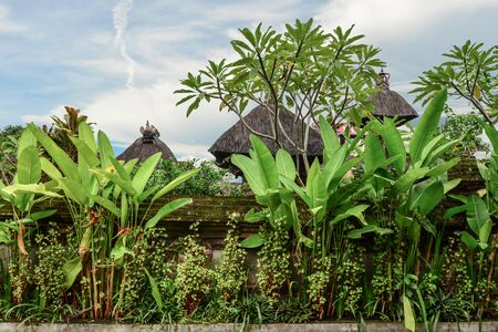 Beautiful plants at the fence of a house in Ubud, Bali, Indonesia